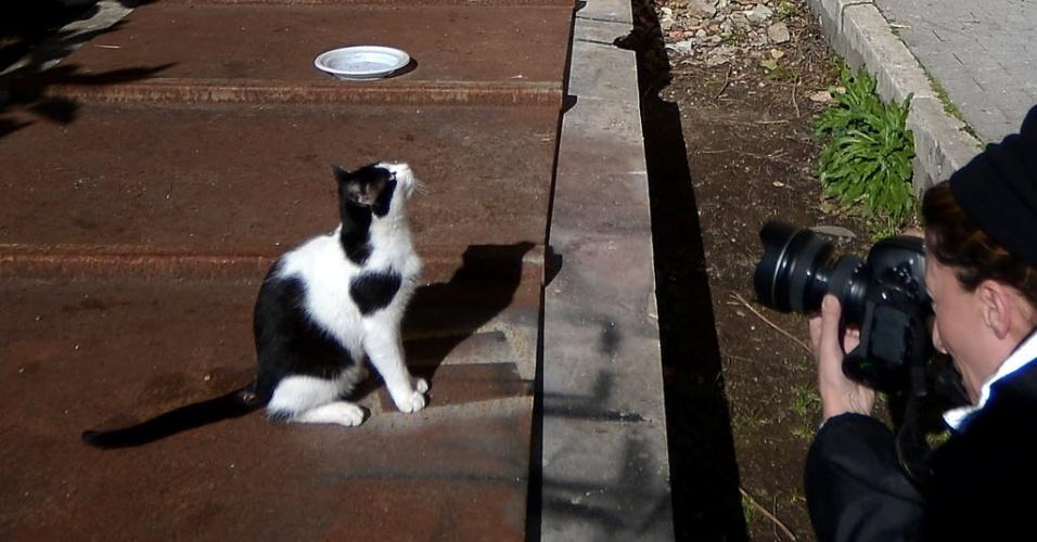 28.fev.2013 - Contessina, uma das duas gatas de Bento 16,