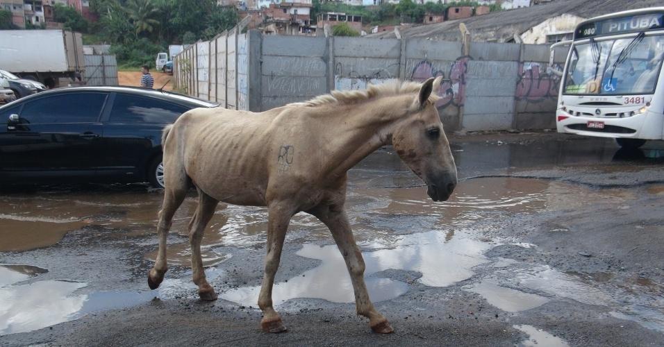 2.mar.2013 - Cavalo foge de trânsito causado por alagamento de ruas de Salvador, na manhã deste sábado (2)