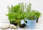 Aplicativo ajuda a detectar doenças e auxilia no cuidado de hortas caseiras - Getty Images