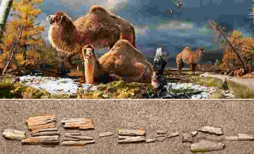 05.fev.2013 - Fragmento de osso encontrado no Canadá revela que a região tinha camelos gigantes, até 30% maiores do que os atuais, e que viviam no Ártico há 3,5 milhões de anos - Nature Communications