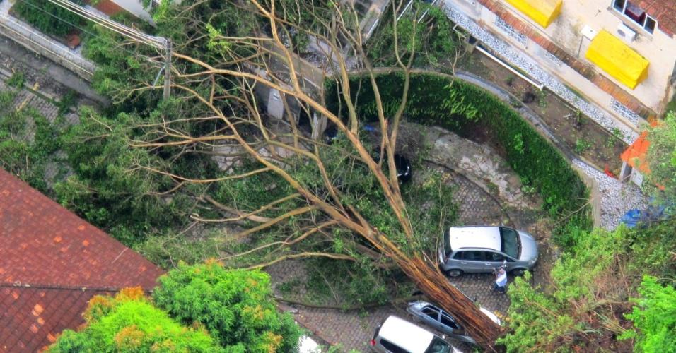 6.mar.2013 - Árvore caída no bairro da Tijuca, zona norte do Rio de Janeiro (RJ), durante a forte chuva que atingiu a cidade da noite desta terça-feira (5), continua no local na tarde desta quarta-feira. A árvore atingiu um carro