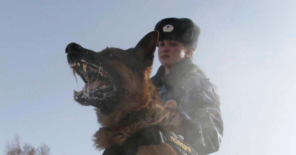 7.mar.2013 - A policial Tatiana Likhoshapka, 24, treina com um cão pastor alemão chamado Antei em uma base policial em um subúrbio da cidade da Rússia siberiana de Krasnoyarsk
