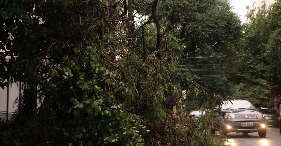 8.mar.2013 - Árvore caiu na rua Sabará, no bairro de Higienópolis, região central de São Paulo (SP), depois que uma forte chuva atingiu a cidade na tarde desta sexta-feira