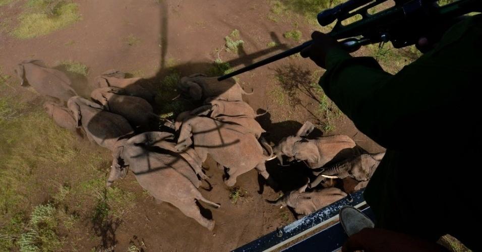 14.mar.2013 - De helicóptero, funcionários do serviço de animais selvagens do Quênia atiram com tranqulizantes em elefantes, para colocar colares com chips nos animais, no parque nacional de Amboseli. É parte de um experimento de monitoramento de seis elefantes, que durará 20 meses e custou até agora US$ 100 mil. A ideia é conhecer melhor a rotina migratória dos elefantes, entre outros dados. O Quênia contabiliza cerca de 37 mil elefantes em todo o país