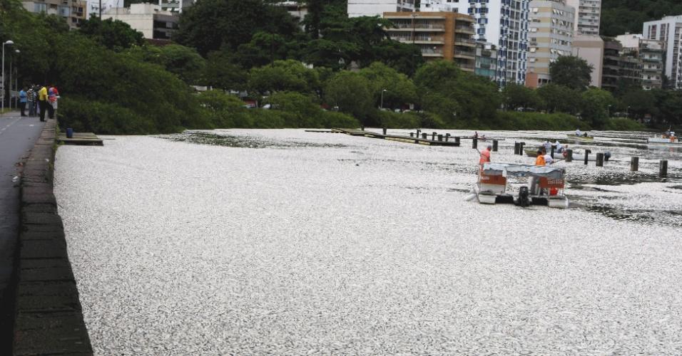 14.mar.2013 - Funcionários da Comlurb (Companhia de Limpeza Urbana) recolhem peixes mortos na Lagoa Rodrigo de Freitas, na zona sul do Rio de Janeiro
