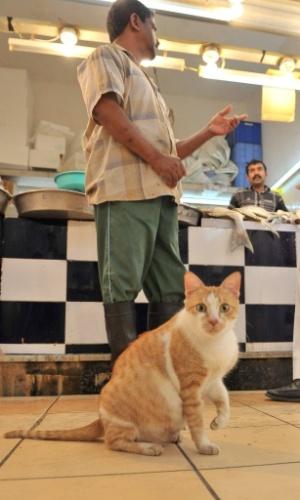 14.mar.2013 - Gato observa fotógrafo, enquanto cliente conversa com vendedor de loja de peixe e vegetais em Dammam, na Arábia Saudita
