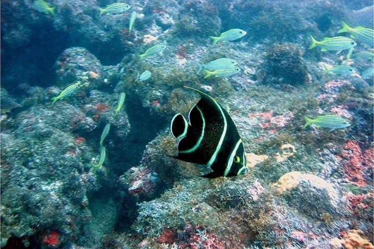 Grande número de espécies de vida marinha são encontradas nas piscinas do município