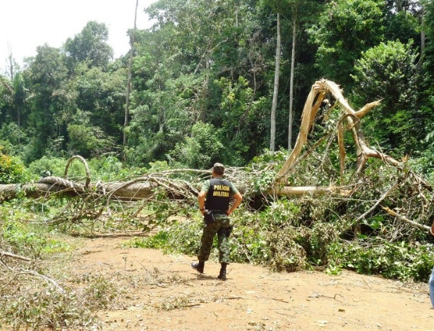 """mar.2013-  Além das apreensões no Curuatinga (8.000 m³) e no rio Pacajá (2.000 m³), o Ibama localizou aproximadamente oito mil m3 de árvores ilegalmente derrubadas em uma fazenda, a 90 km de Anapu.""""Em um única área de estocagem, os fiscais apreenderam 100 toras"""", revelou o superintendente do Ibama no estado, Hugo Américo"""