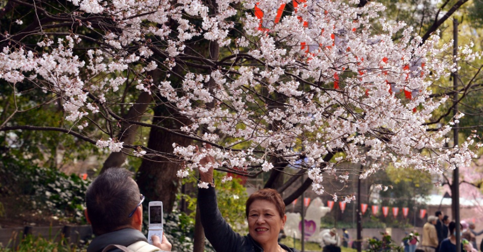 17.mar.2013 - Japoneses aproveitam dia de sol para visitar parques repletos de flores de cerejeiras. A agência meteorológica do Japão anunciou o início oficial da temporada da sakura no país