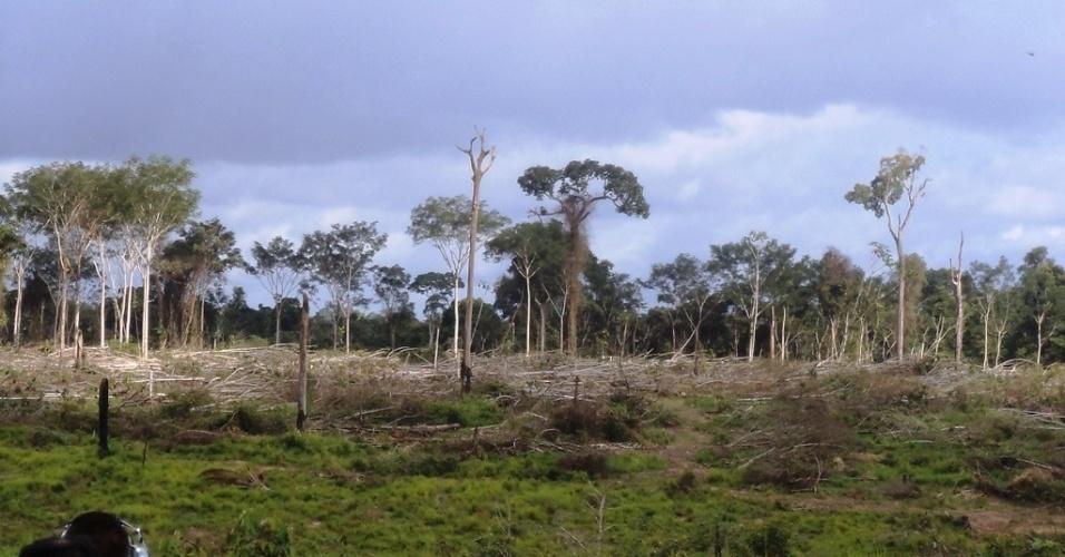 19.mar.2013 - mar.2013 - O Ibama embargou 2.500 hectares de áreas de floresta ilegalmente desmatadas para pecuária na região de Novo Progresso, no oeste do Pará, desde o início da Operação Onda Verde - cerca de R$ 7 milhões em multas já foram aplicadas pelo órgão