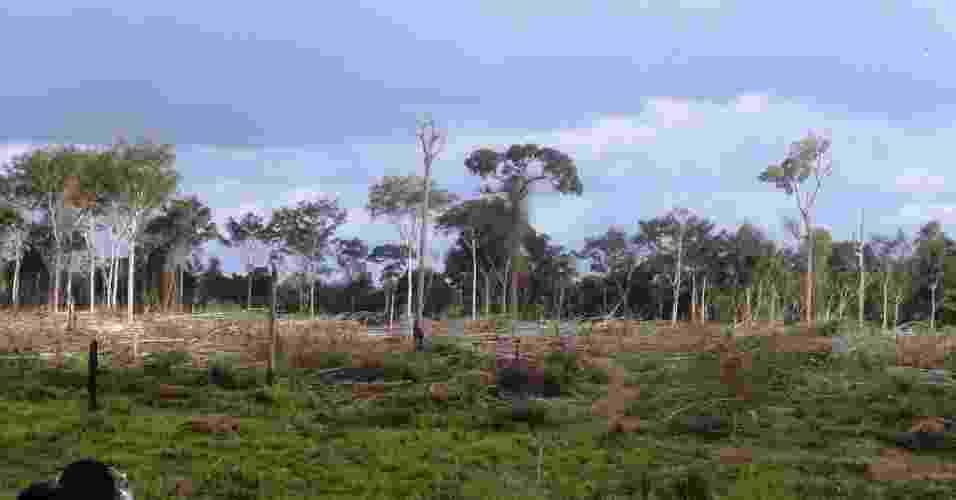 19.mar.2013 - mar.2013 - O Ibama embargou 2.500 hectares de áreas de floresta ilegalmente desmatadas para pecuária na região de Novo Progresso, no oeste do Pará, desde o início da Operação Onda Verde - cerca de R$ 7 milhões em multas já foram aplicadas pelo órgão - Leonardo Tomaz/Ibama/Divulgação