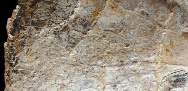 20.mar.2013 - Detalhe do lado esquerdo de um dos fósseis encontrados na Bacia do Araripe