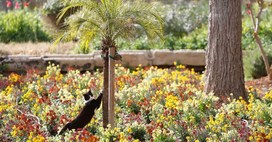 20.mar.2013 - Gato afia as unhas em palmeira no jardim da residência oficial do presidente de Malta