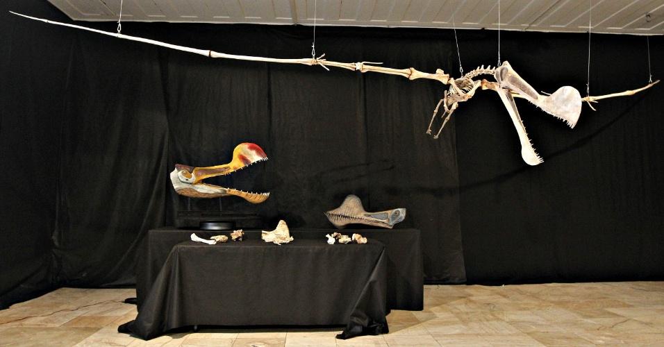 """20.mar.2013 - Pesquisadores do Museu Nacional da UFRJ (Universidade Federal do Rio de Janeiro) apresentaram o fóssil de um pterossauro encontrado na bacia do Araripe, que fica entre Piauí, Pernambuco e Ceará, no Nordeste do país. O """"Tropeognathus"""", espécie da família Anhangueridae, é o maior indivíduo do grupo encontrado no hemisfério Sul, garante a pesquisa. Além do fóssil, o grupo fez uma reconstrução artificial do esqueleto a partir do que foi encontrado e um modelo de como ele seria em vida em tamanho real"""