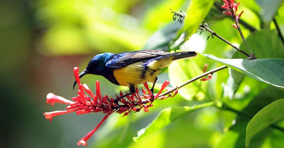 20.mar.2013 - Um pássaro pegador de mel, colhe o néctar das flores após as chuvas, em Harare