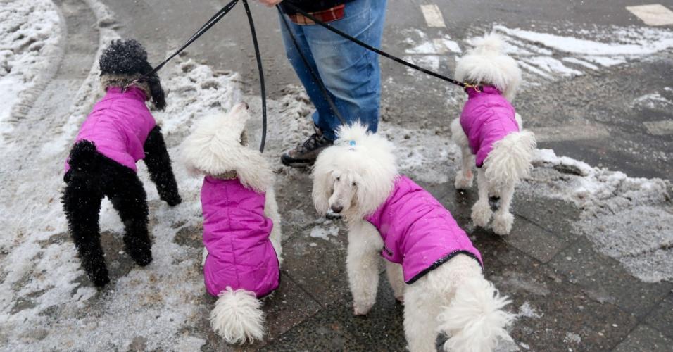 20.mar.2013 - Mulher passeia com cães agasalhados em Berlim, na Alemanha