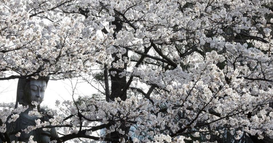 22.mar.2013 - Cerejeiras, árvores-símbolo do Japão, florescem ao redor de estátua budista (esquerda) em Tóquio. O desabrochar das cerejeiras foi recorde neste ano: pela segunda vez na capital, começou mais cedo que o previsto. A agência meteorológica japonesa crê que as altas temperaturas registradas no país em março tenham antecipado o efeito - a última vez que o fenômeno começou mais cedo foi em 2002. A floração das cerejeiras dura apenas uma semana e costuma ser motivo para famílias se reunirem nos parques de Tóquio