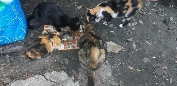 As pessoas que afirmam alimentar os animais há anos foram impedidas de entrar desde a ação da PM que retirou os índios do local - Andréa Lambert/Divulgação