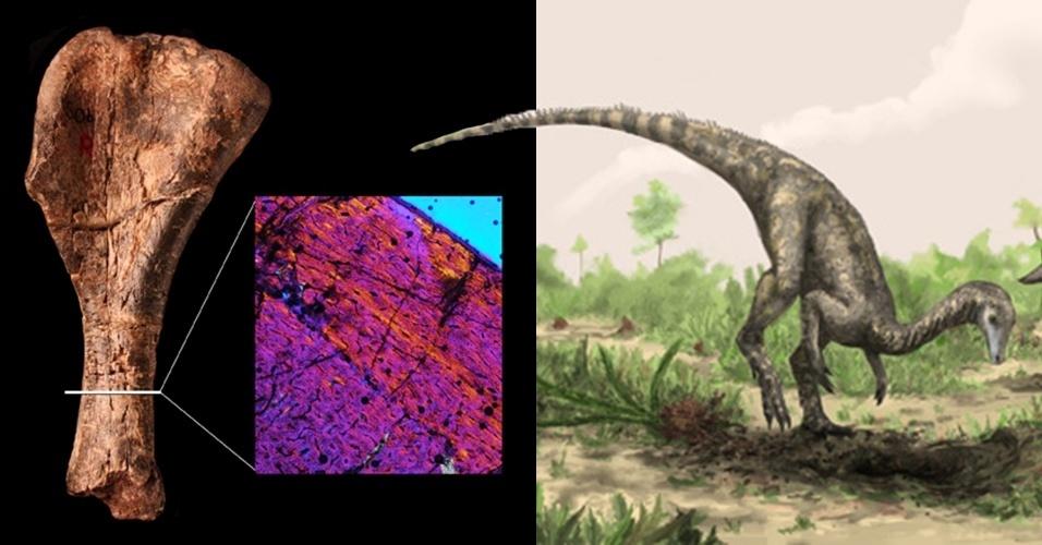 26.mar.2013 - Ossos fossilizados descobertos em 1930 na Tanzânia, na África, podem ser do dinossauro mais antigo já encontrado pelo homem, segundo recente pesquisa da Universidade de Washington, nos Estados Unidos. O