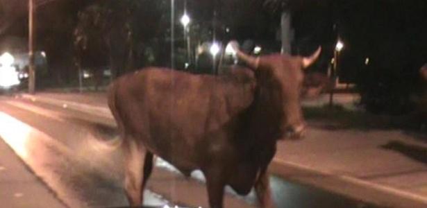 26.mar.2013 - PM prende 11 durante farra do boi no centro de Florianópolis - Divulgação