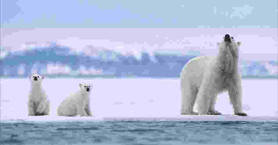 28.mar.2013 - ÁLBUM DA BBC - A fotógrafa e ambientalista americana Jenny E Ross, junto com Andrew Derocher, professor de ciências biológicas na Universidade de Alberta, estão analisando como a mudança climática afeta a vida dos ursos polares e coloca o futuro da espécie em perigo. Acima, a família de ursos polares em um fiorde de gelo - Jenny E. Ross