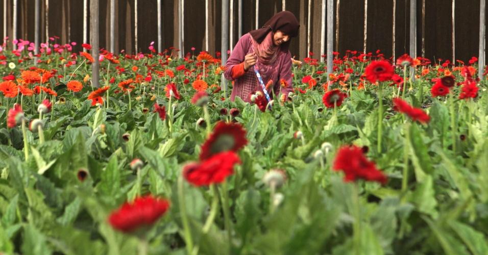 1º.abr.2013 - Mulher varre um viveiro de flores na periferia do Cairo, no Egito, nesta segunda-feira (1º)