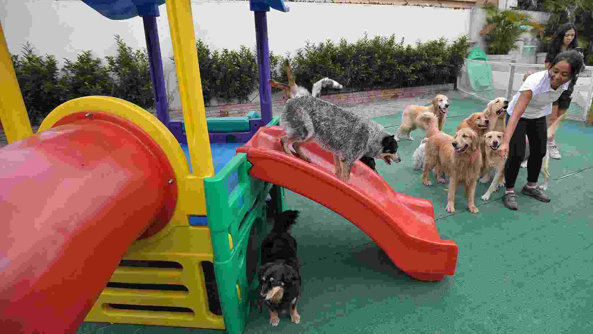 DogResort, creche para cachorros em São Paulo (SP) - Reinaldo Canato/UOL