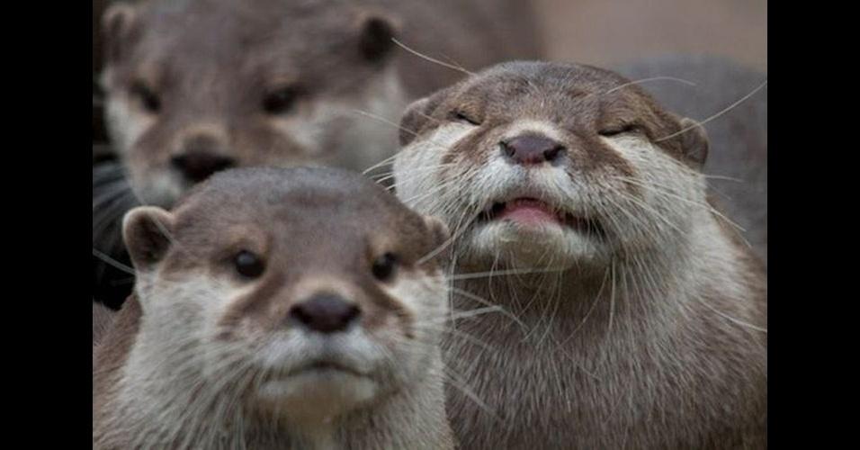 """Como em outras fotos desse álbum, é comum encontrar um bicho intrometido nas fotos dos humanos. No entanto, alguns animais são tão """"bicões"""" que invadem até a foto de seus companheiros, como o animal """"sorrindo"""" no fundo"""