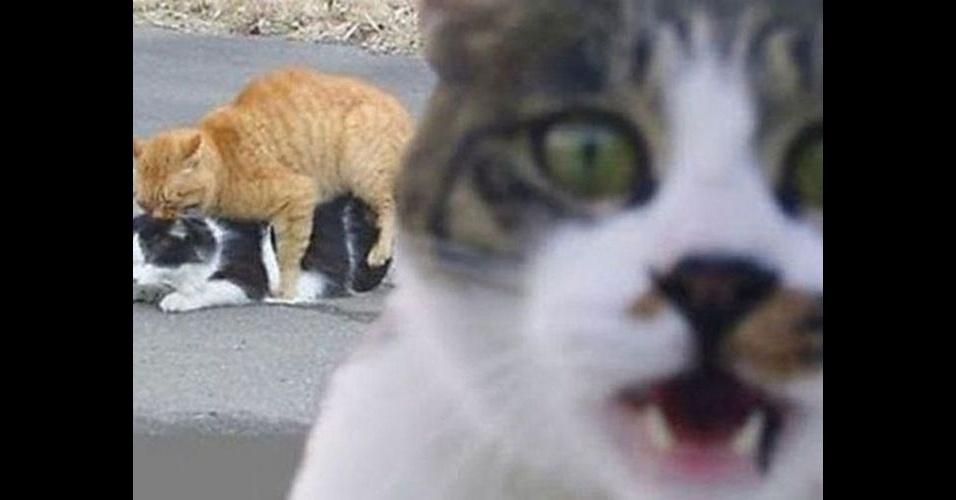 """Como em outras fotos desse álbum, é comum encontrar um bicho intrometido nas fotos dos humanos. No entanto, alguns animais são tão """"bicões"""" que invadem até a foto de seus companheiros, como o gato"""