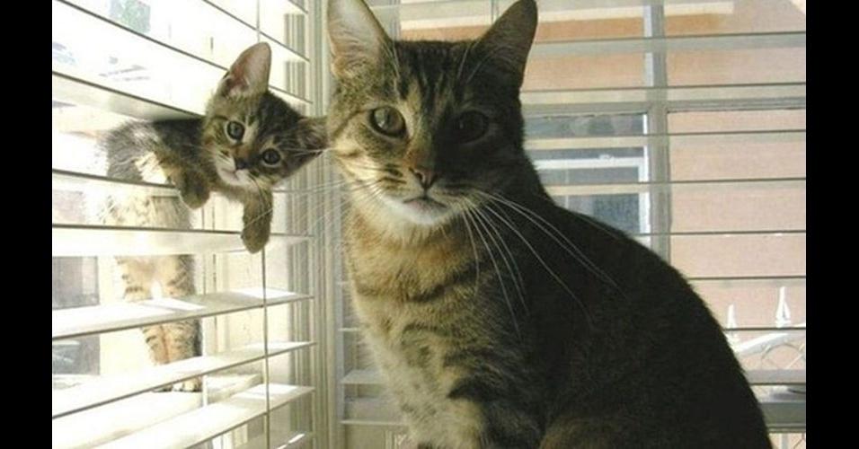 """Como em outras fotos desse álbum, é comum encontrar um bicho intrometido nas fotos dos humanos. No entanto, alguns animais são tão """"bicões"""" que invadem até a foto de seus companheiros, como o gato entrando pela janela"""