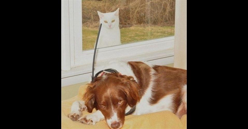 """Como em outras fotos desse álbum, é comum encontrar um bicho intrometido nas fotos dos humanos. No entanto, alguns animais são tão """"bicões"""" que invadem até a foto de seus companheiros, como o gato na janela"""