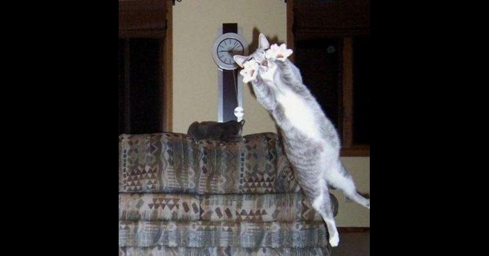 """Como em outras fotos desse álbum, é comum encontrar um bicho intrometido nas fotos dos humanos. No entanto, alguns animais são tão """"bicões"""" que invadem até a foto de seus companheiros, como o gato que aparece pulando"""