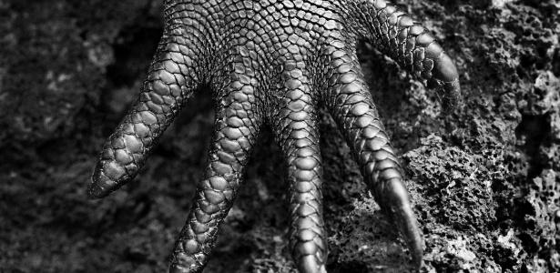 """O fotógrafo Sebastião Salgado registra a pata de uma iguana nas ilhas Galápagos para o livro """"Gênesis"""" - Sebastião Salgado"""