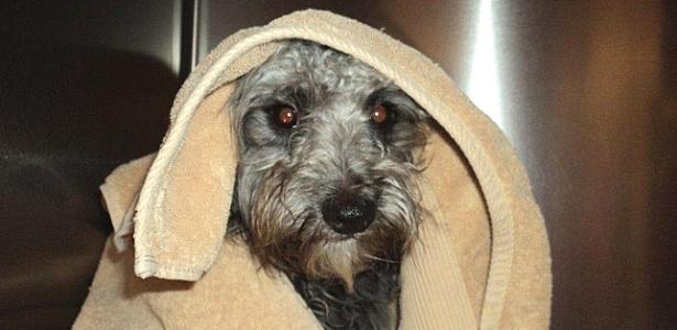 O cachorro resgatado, que recebeu o nome de Banjo e foi colocado para adoção - Riverside County Animal Services/Divulgação