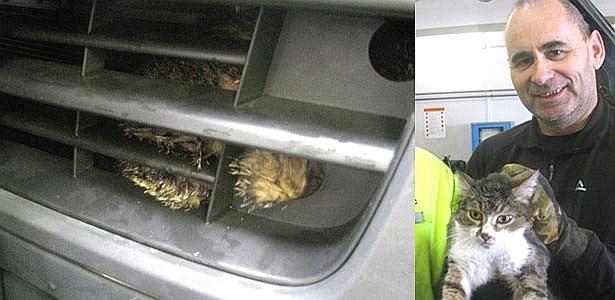 O gato lavado no capô (esq.) e depois, salvo nas mãos do dono - Reprodução/Burgenland.orf.at