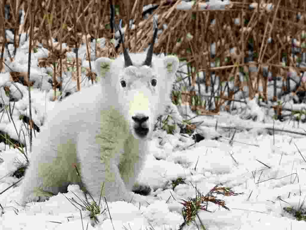 Photoshop mistura animais diferentes criando ''espécies'' bizarras - Reprodução/Imgur