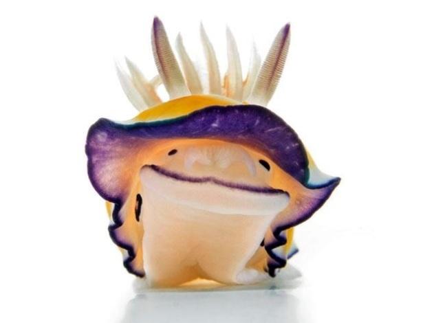 """19.abr.2013 - Esta colorida lesma do mar chamada de """"Felimida britoi"""" parece estar sorrindo para você, mas pode ser tóxica. O molusco gastrópode marinho da família Chromodorididae foi descoberto em 1983 por Ortea & Pérez"""