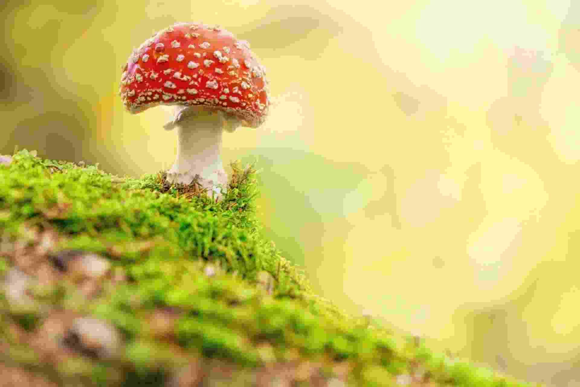 Cogumelo mágico, cogumelo alucinógeno - Thinkstock