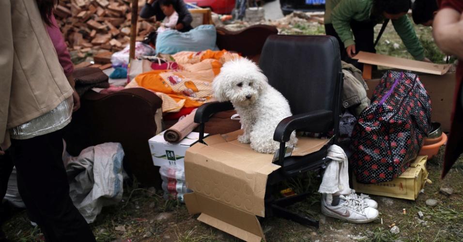 21.abr.2013 - Cachorro de moradores da cidade Yaan, no sudoeste da China que estão acampados fora da casa onde moram por medo de novos tremores. O terremoto de magnitude 6,6 na escala Richter, que começou às 8h deste sábado (20), matou mais de cem pessoas e feriu cerca de 6.000