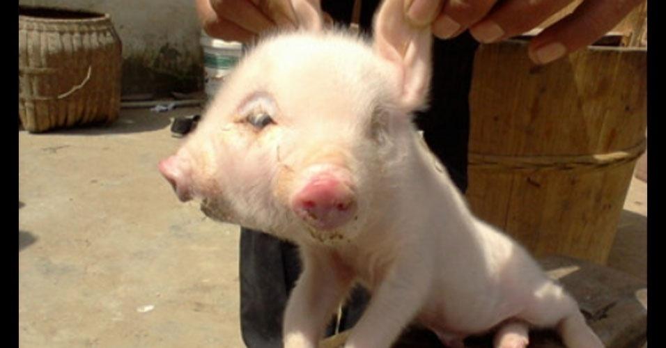 Os donos de um criadouro na China amoleceram seus corações depois de um dos porquinhos de lá nascer com duas cabeças! O leitão encantou os proprietários do local, que resolveram salvá-lo do matadouro