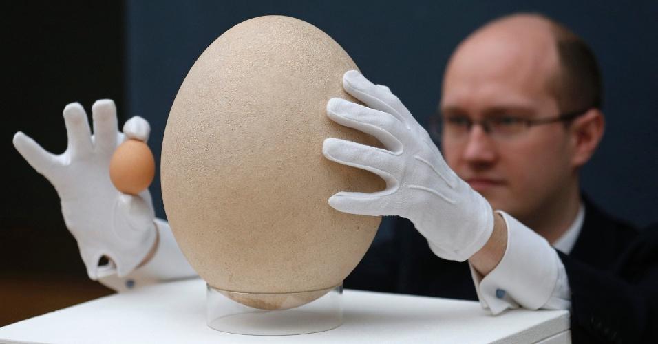 """24.abr.2013 - Ovo de ave extinta no século 17 foi vendido por mais do que o dobro do preço estimado, por US$ 101.813 (cerca de R$ 206.069). Na foto, o especialista da casa de leilões Christie James Hyslop segura um ovo de galinha (esquerda) e o ovo pré-fossilizado de quase 23 centímetros de diâmetro de uma ave elefante  (""""Aepyornis maximus"""") de mais de 400 anos. A ave nativa de Madagascar era grande, com 3,4 metros de altura"""