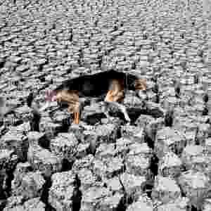 26.abr.2013 - Cachorro caminha sobre o leito seco e rachado da represa Las Canoas, localizada cerca de 60 km ao norte de Manágua (Nicarágua). Uma grande área da represa está seca desde fevereiro, em função do uso de suas águas por produtores de arroz, o que afeta centenas de moradores da região dependentes das suas águas para subsistência, segundo a mídia local - Oswaldo Rivas/Reuters