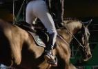 Caso de doença em cavalo cancela participação do Brasil em Mundial - Vinicius Konchinski/UOL