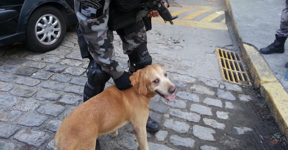 29.abr.2013 - O cão Apolo, do Batalhão de Ação com Cães da Polícia Militar, auxilia na varredura em busca de drogas e armas na comunidade do Cerro-Corá, na zona sul do Rio de Janeiro. Em 30 minutos, PMs ocuparam a favela e outras duas comunidades menores, para dar início à instalação de uma UPP (Unidade de Polícia Pacificadora) na região