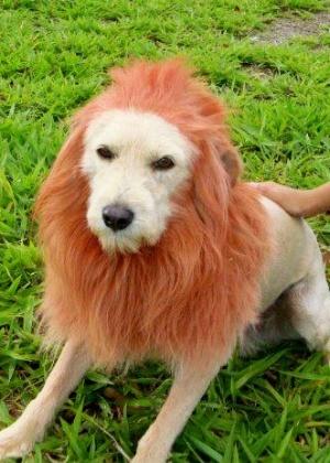 Vira-lata fica parecido com leão após receber poda em São Carlos (SP)