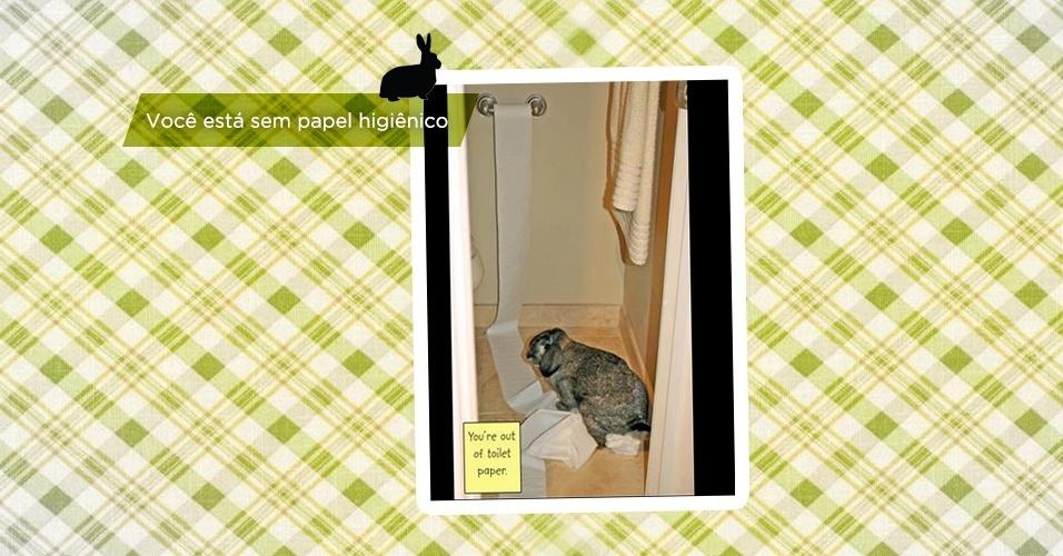 """Sobrou para os coelhos. Assim como as travessuras dos cachorros foram parar na web, as brincadeiras dos orelhudos também acabaram na rede, com o nome de """"Bunny Shaming"""" (em inglês). A fofura desses pequeninos pode enganar, mas as plaquinhas feitas pelos donos garantem: eles são sapecas"""