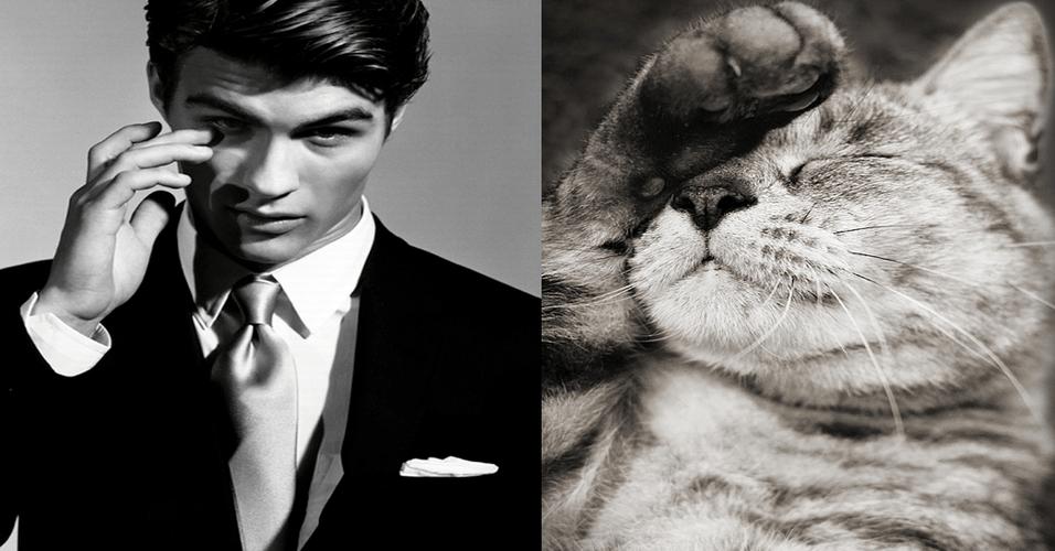 O Tumblr Des Hommes et des Chatons (Homens e gatinhos, em português) coloca fotos de homens e gatos sensualizando em posições incrivelmente parecidas