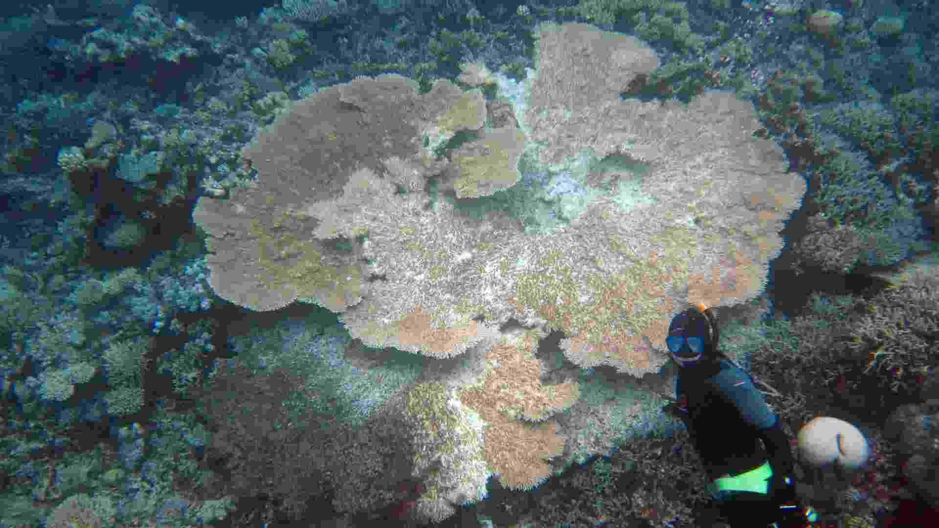 """6.mai.2013 - A Unesco, órgão da ONU (Organização das Nações Unidas) para a Educação, Ciência e Cultura, criticou duramente o governo da Austrália pelos """"progressos limitados"""" de proteção e conservação da Grande Barreira de Cora. A imensa faixa de corais, que atrai turistas do mundo todo, corre o risco de ser declarado """"em perigo"""" na lista de Patrimônio da Humanidade Ameaçado durante o congresso anual da Unesco que ocorre no próximo mês, em Phnom Penh, no Camboja - F. Joseph Pollock/AFP"""