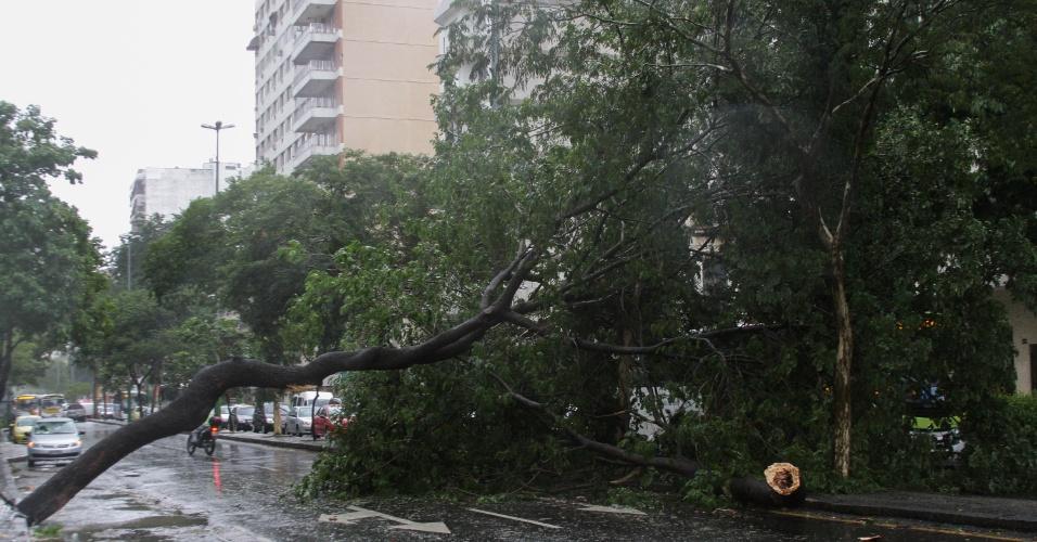 6.mai.2013 - Árvore cai e atinge ônibus na rua 28 de Setembro, em Vila Isabel, na zona norte do Rio de Janeiro, na manhã desta segunda-feira (6), devido aos fortes ventos. Não há informação sobre feridos