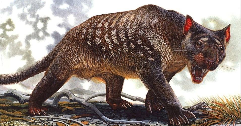 """7.mai.2013 - A megafauna pré-histórica que habitava a região que abrangia a Austrália e a Tasmânia foi dizimada pelas mudanças climáticas, e não pela ação do homem, revela estudo internacional publicado na revista PNAS. O processo de desertificação da Austrália, que começou há cerca de 450 mil anos, provocou grandes queimadas na mata e extinguiu as grandes espécies como o """"Thylacoleo carnifex"""", um leão marsupial com garras afiadas e presas duras como alicate (foto), o """"Diprotodon"""", o maior marsupial que já viveu no planeta, lagartos gigantescos de saliva tóxica e cangurus de grande porte"""